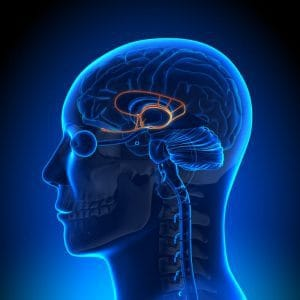 Lymbic system play a big role in tinnitus perception